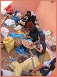 photo-cooperative de femme productrice d'argan au maroc